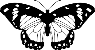 butterfly black and white by eiluvision on deviantart