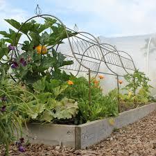 ornamental plant frame haxnicks