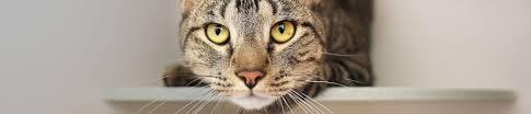 pet care dog cat horse poison control aspca