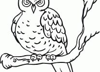 owl coloring pictures wallpaper download cucumberpress com