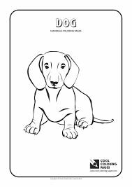 mammals coloring pages cool coloring pages