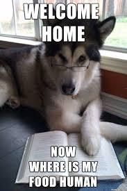 Welcome Home Meme - welcome home human meme on imgur
