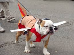 307 best pugs in costumes images on pinterest costumes pugs in