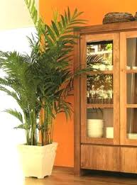 Fake Plants Home Decorations How To Decorate Your Home With Artificial Plants