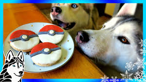 diy pokeball dog treats snow dogs snacks 59 diy dog treats