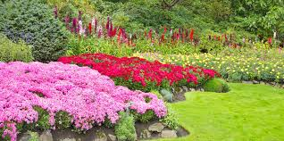 beautiful plants make your garden look beautiful with plants and flowers to last all year