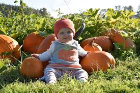 best pumpkin patches and farms near seattle