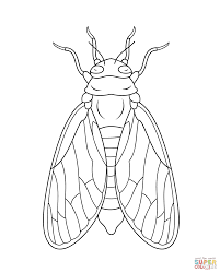 cicada coloring page free printable coloring pages