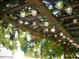 grape vine trellis photo u2013 outdoor decorations