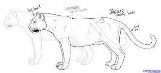 cat side profile drawing geborneo club geborneo club