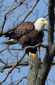 Kentucky wildlife tours images 38 best kentucky wildlife images kentucky wildlife jpg