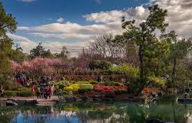Auburn Botanical Garden Cherry Blossom Festival In Auburn Botanical Gardens Aussie Weekend