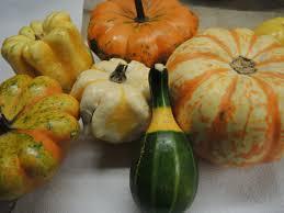 saving seeds ornamental gourds