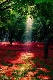 imagenes lindas naturaleza bed of flowers art pinterest paisajes naturaleza y flores