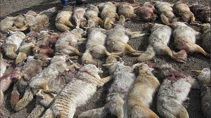 Arizona Wildlife images Petition governor doug ducey prohibit wildlife killing contests jpg