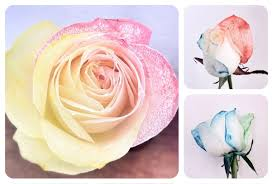 tie dye roses how to tie dye roses teleflora