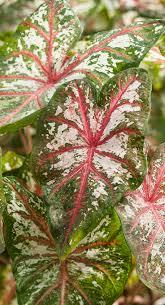 2244 best garden plants shrubs flowers trees images on pinterest