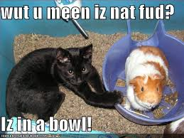 Guinea Pig Meme - undercover guinea pigs internet memes lolpigz