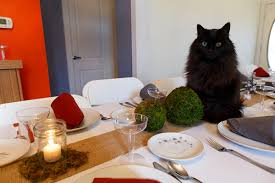 ask a vet which thanksgiving foods are safe for cats catster