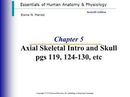 Human Anatomy And Physiology Marieb 7th Edition Chapter 7 The Skeleton Part A Ppt Video Online Download