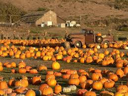Local Pumpkin Patches So Beautiful I Used This As A Screensaver Last Year Fall I