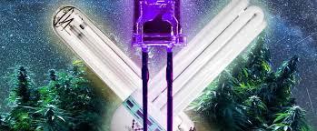 most efficient grow light led vs cfl vs hps grow lights for cannabis loudbank