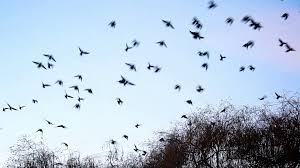 birds flying away from the tree stock footage videoblocks