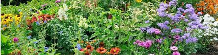 5 steps to a fabulous garden milorganite