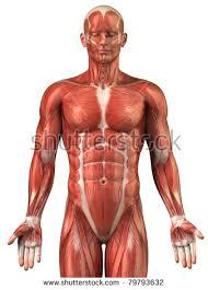 Picture Of Anatomical Position Cliparea L Custom Media U0027s