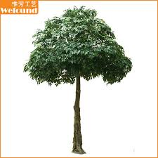 ft0902 small ficus tree we found limited