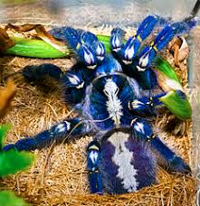 are tarantula bites dangeous sometimes yes that reptile