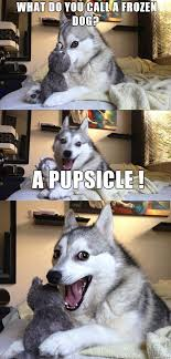 Pun Husky Meme - 17 pun dog puns that will instantly brighten your day