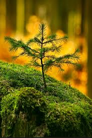 tiny tree closeup iphone wallpapers iphone 5 s c 4 s 3g wallpapers
