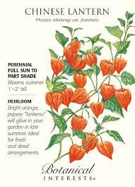 botanical sts lantern heirloom seeds 150 mg physalis
