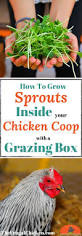 build a grazing box for healthier backyard chickens detailed