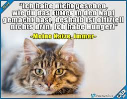 s e katzen spr che 308 best cats images on pets cats and