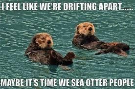 Otter Memes - puns otter funny puns pun pictures cheezburger