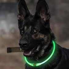 Light Up Dog Collar Dog Collars Dog Supplies Warning Save Up To 87 On Dog