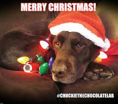 Christmas Dog Meme - merry christmas imgflip