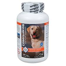 best joint supplement joint supplements for dogs to keep your dog healthy