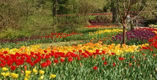 Botanical Garden Cincinnati Tulip Mania Has Struck At The Cincinnati Zoo The Cincinnati Zoo