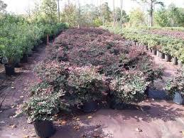 garden center tree nursery in brunswick county tree farm