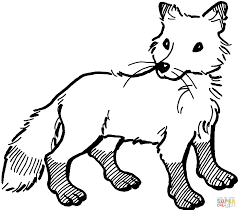 arctic fox clipart tundra animal pencil and in color arctic fox