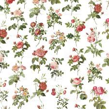 wallpaper with roses antique flower illustrations stock vector art
