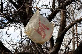 plastic bag in tree picture free photograph photos domain