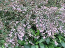 Flowering Shrubs New England - mid summer u2013 that troublesome period in the garden high plains