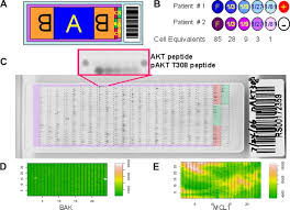 functional proteomic profiling of aml predicts response and
