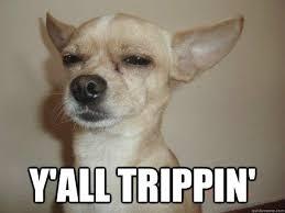 Funny Chihuahua Memes - trippin chihuahua memes quickmeme
