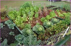 Gardening Layout Raised Vegetable Garden Beds Layout Home Design Ideas
