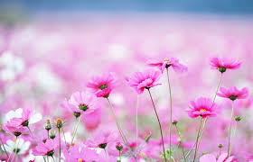 1440x852px 153 76 kb flower wallpaper 378953